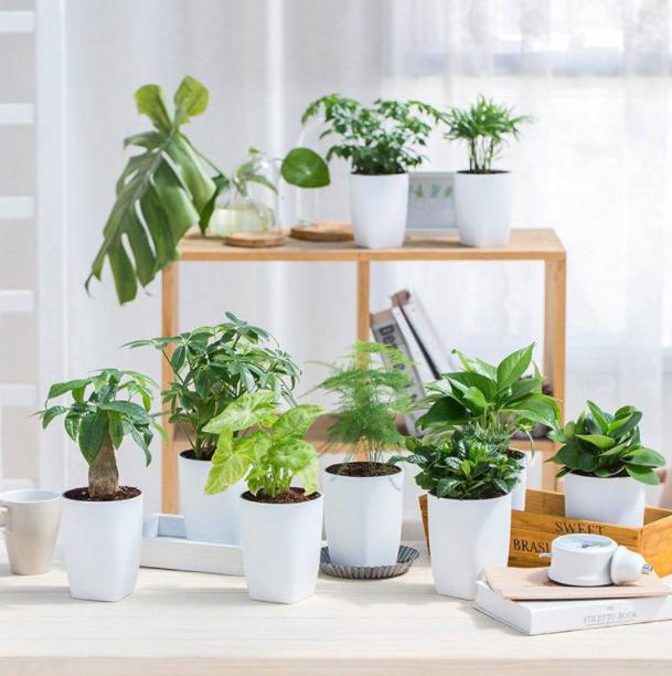 办公室绿植租赁好吗?