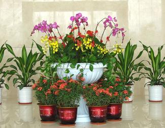 植物租摆对室内环境的影响
